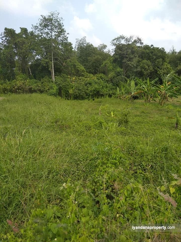 For sale tanah 12 are ID:MKM01  BUC di canggu kuta bali near umalas kerobokan